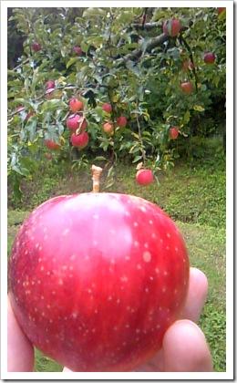 2012年秋:りんご